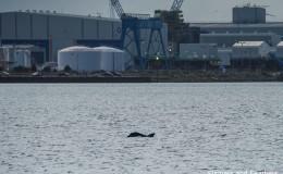 Tour Review: Dolphin Explorer