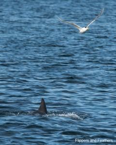Dolphin Explorer 4