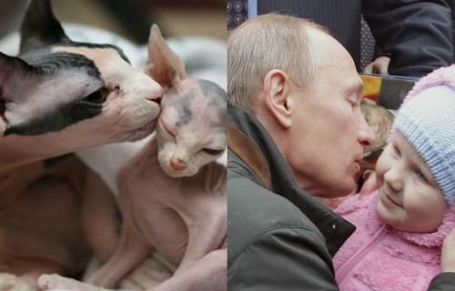 Putin-Cat-3