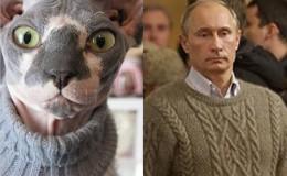 Vladimir Putin is a Hairless Cat