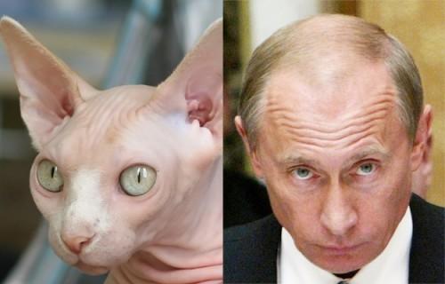 vladamir_putin_cat