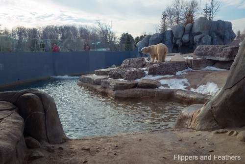 Toronto Zoo FNF polar bear habitat