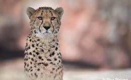 Facility Spotlight: Toronto Zoo