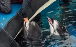 Facility Spotlight: Vancouver Aquarium