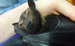 Species Spotlight: Bats