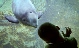 Euthanasia, Humane Killing, and the Vancouver Aquarium