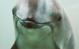 Animal Rescue, Daisy the Harbour Porpoise, and Saving the Vaquita In Her Name