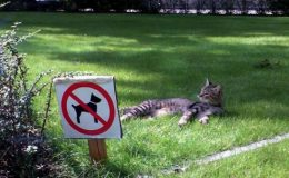 Dog Owners: Yes, The Rules Do Apply To You